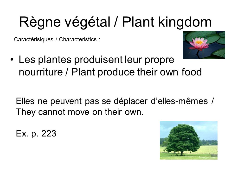 Règne végétal / Plant kingdom