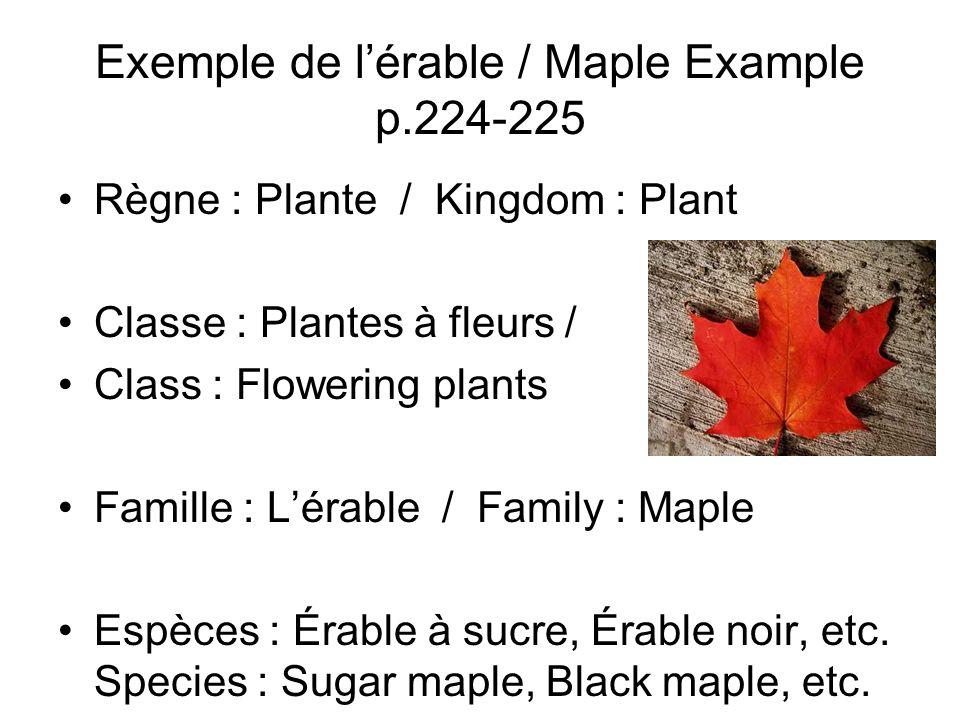 Exemple de l'érable / Maple Example p.224-225