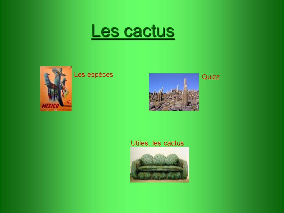 Les cactus Les espèces Quizz Utiles, les cactus