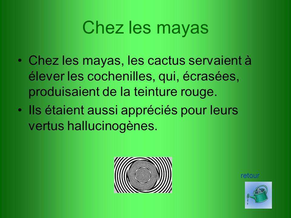 Chez les mayas Chez les mayas, les cactus servaient à élever les cochenilles, qui, écrasées, produisaient de la teinture rouge.