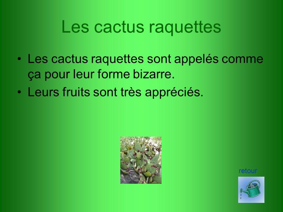Les cactus raquettes Les cactus raquettes sont appelés comme ça pour leur forme bizarre. Leurs fruits sont très appréciés.