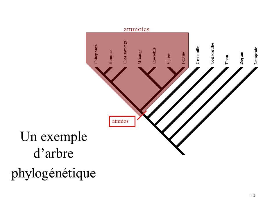 Un exemple d'arbre phylogénétique