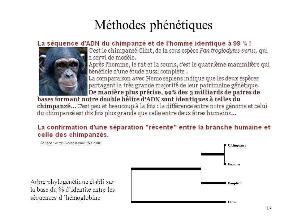 Méthodes phénétiques Source : http://www.hominides.com/ Arbre phylogénétique établi sur la base du % d'identité entre les séquences d 'hémoglobine.