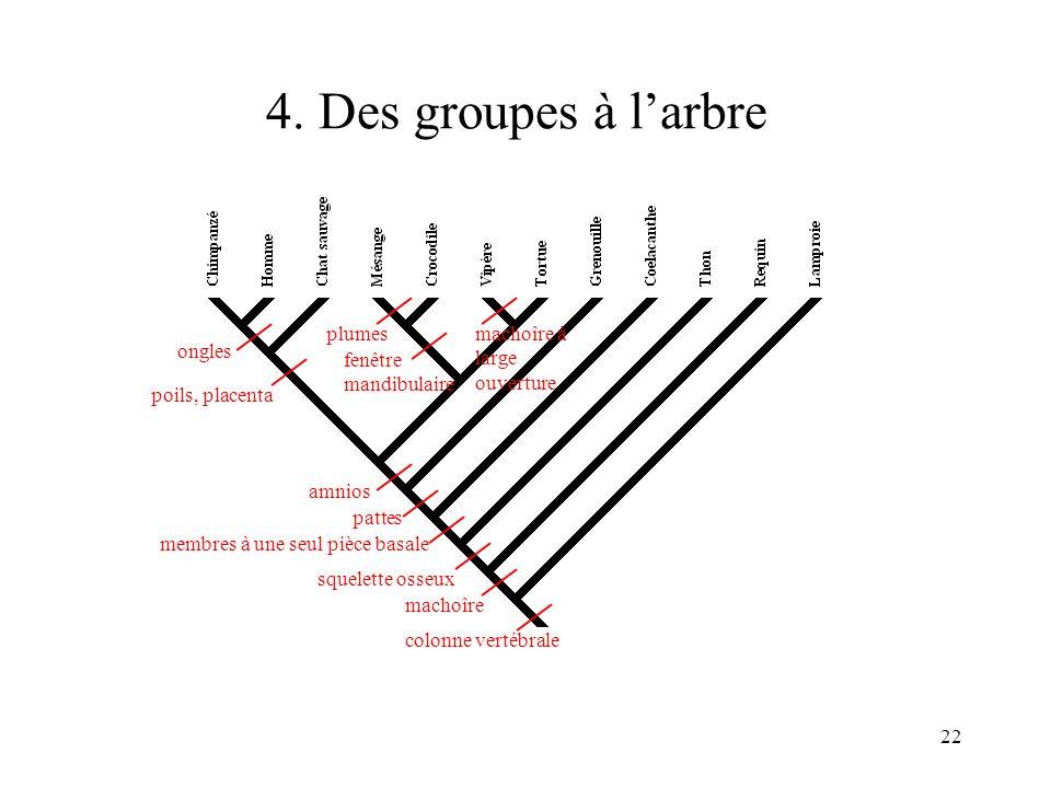 4. Des groupes à l'arbre machoîre squelette osseux colonne vertébrale