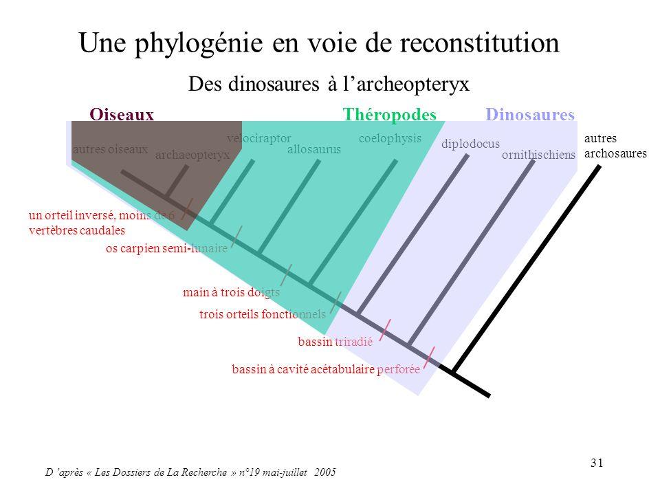 Une phylogénie en voie de reconstitution