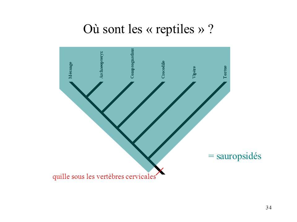 Où sont les « reptiles » = sauropsidés