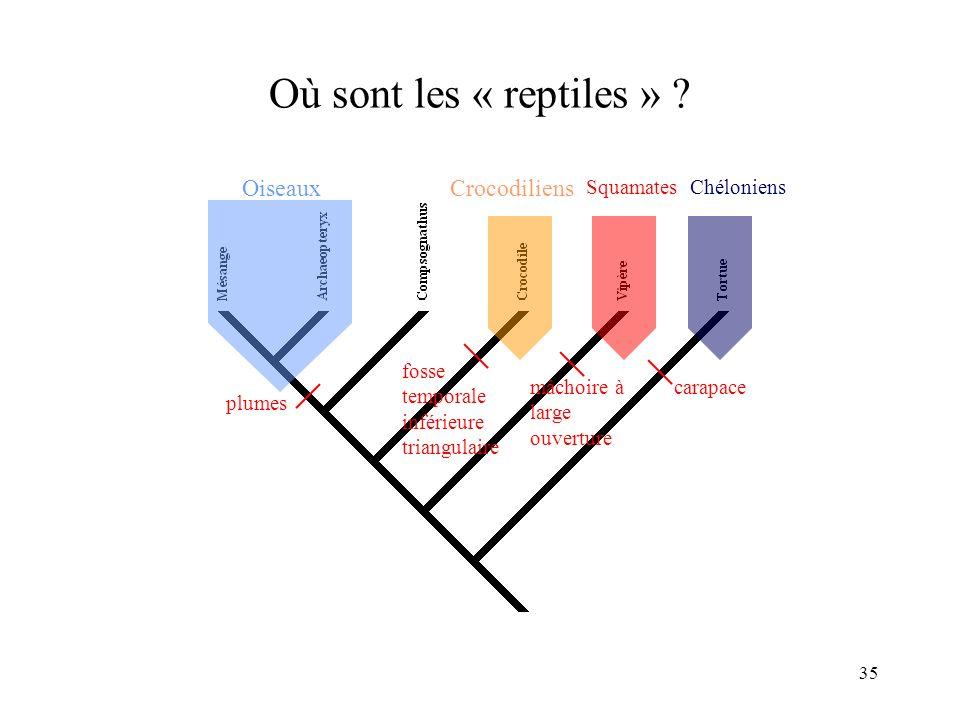 Où sont les « reptiles » Oiseaux Crocodiliens plumes