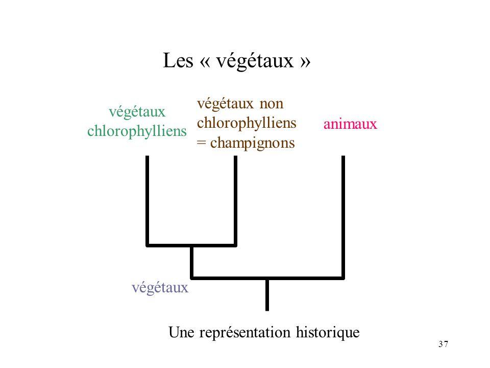 végétaux chlorophylliens