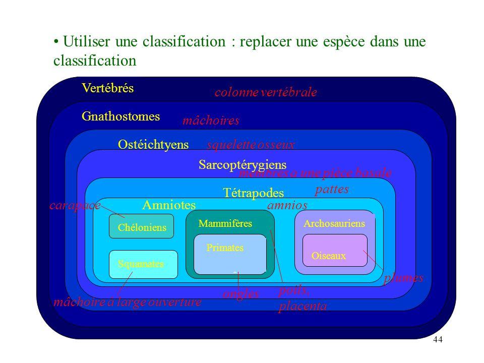 Utiliser une classification : replacer une espèce dans une classification