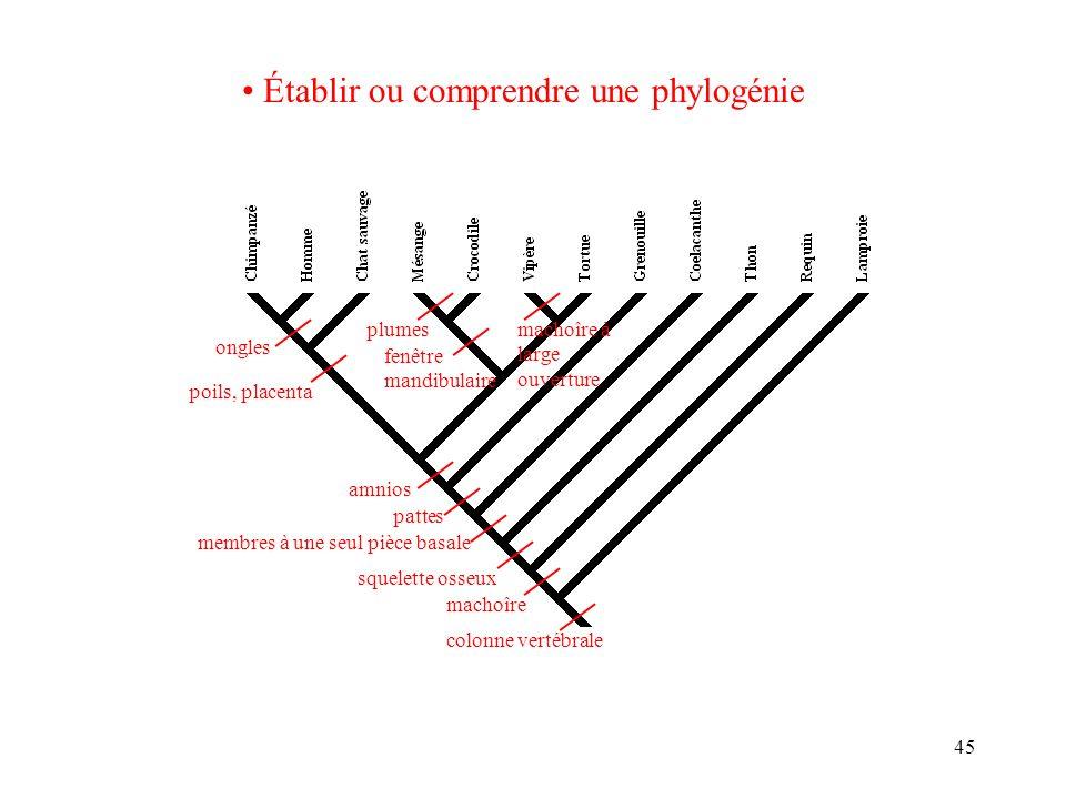 Établir ou comprendre une phylogénie