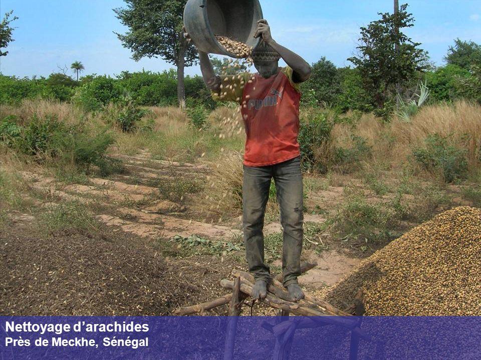 Nettoyage d'arachides