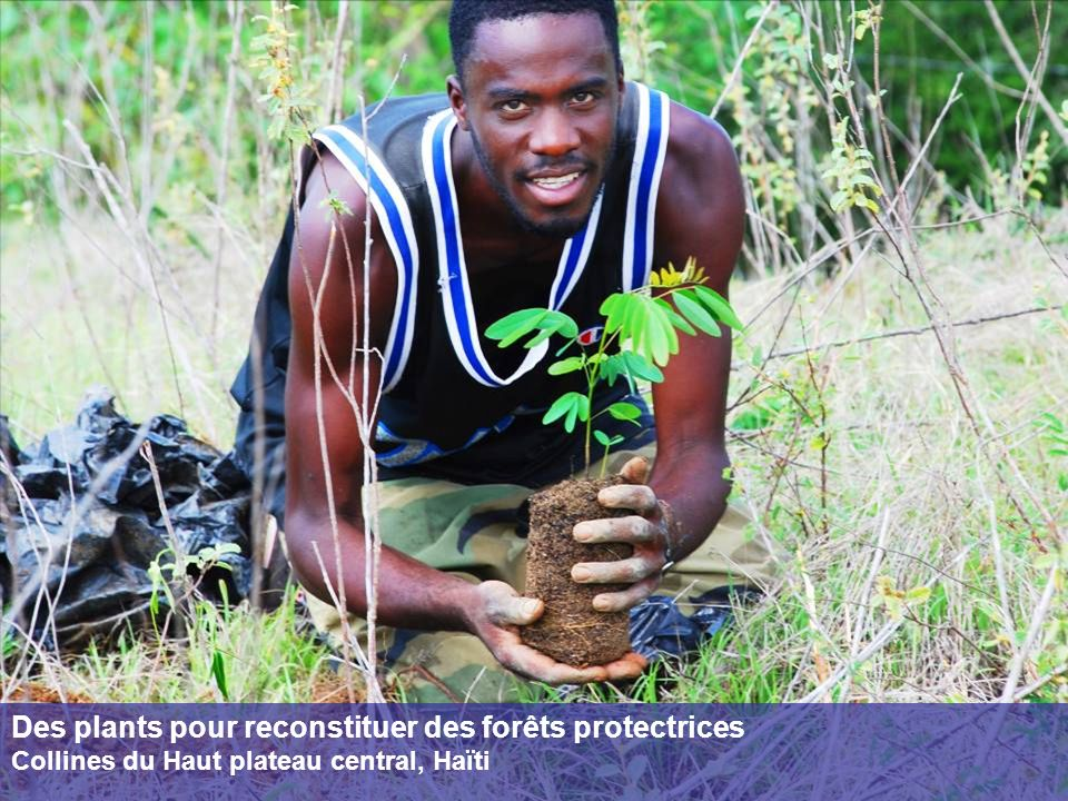 Des plants pour reconstituer des forêts protectrices