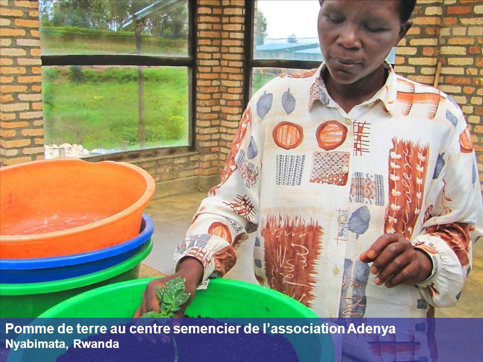 Pomme de terre au centre semencier de l'association Adenya