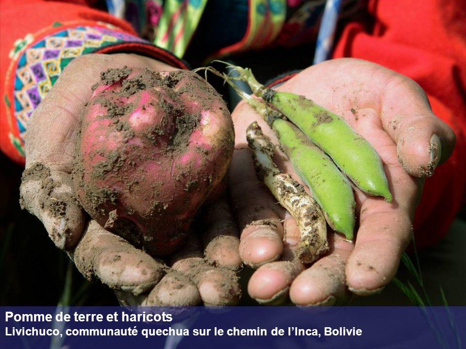 Pomme de terre et haricots