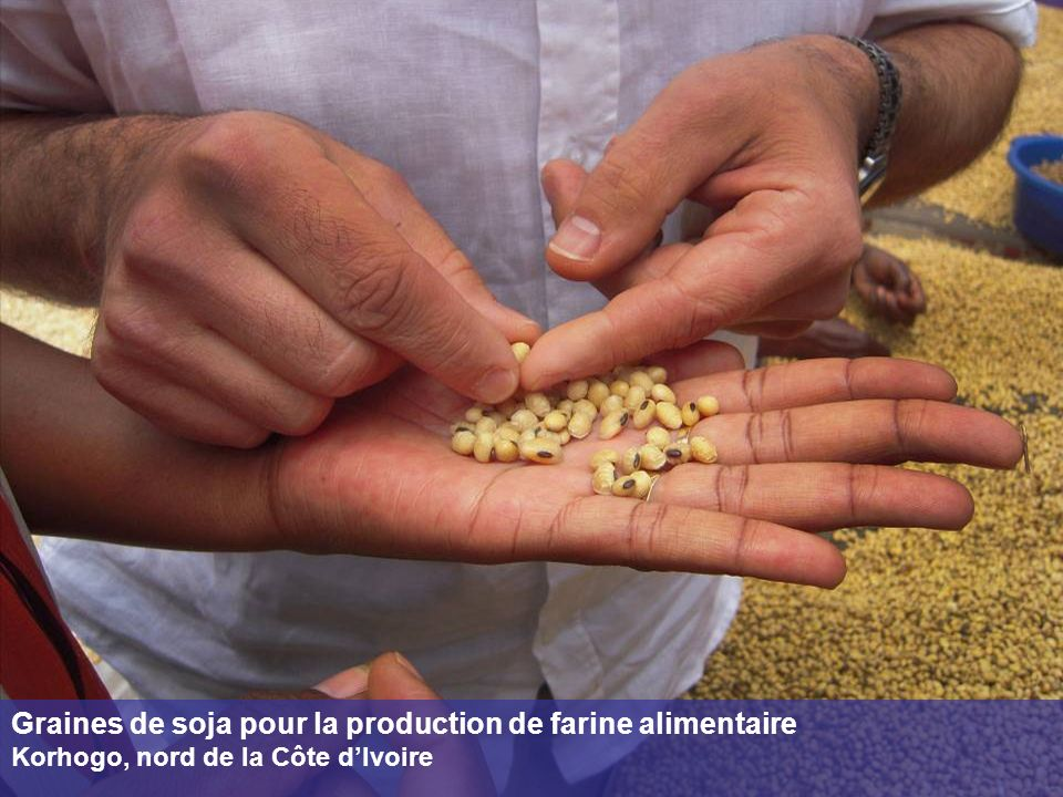 Graines de soja pour la production de farine alimentaire
