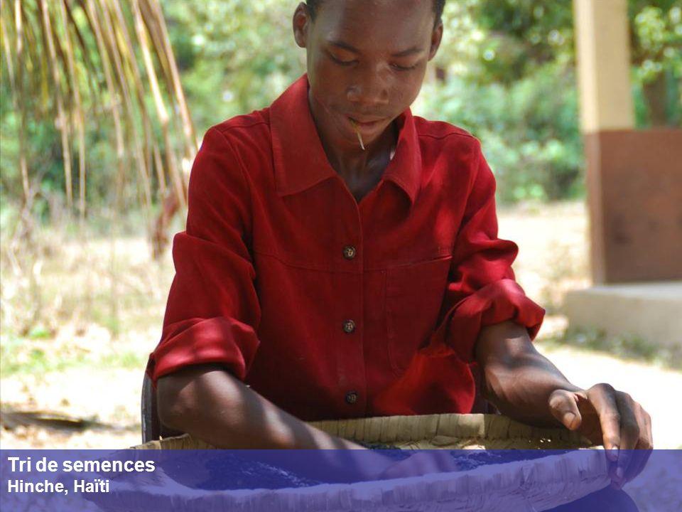 Tri de semences Hinche, Haïti