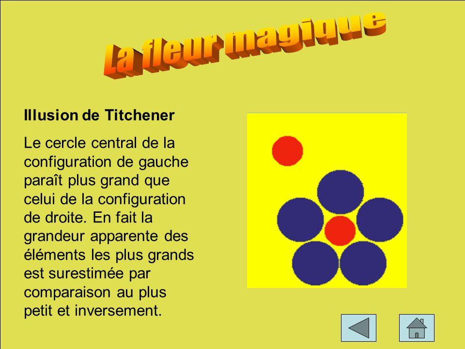 La fleur magique Illusion de Titchener