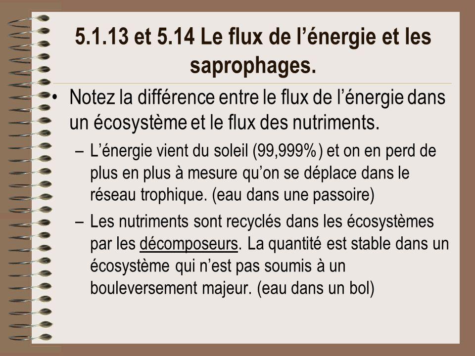 5.1.13 et 5.14 Le flux de l'énergie et les saprophages.