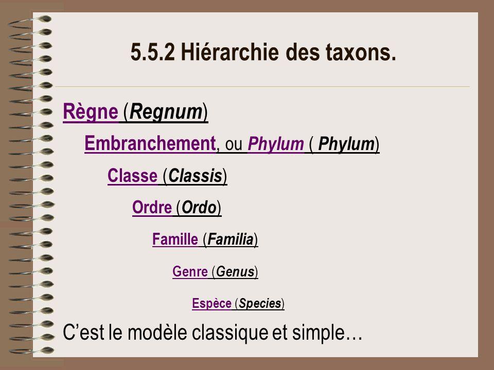 5.5.2 Hiérarchie des taxons. Règne (Regnum) Classe (Classis)