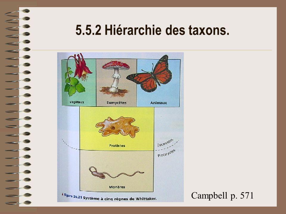 5.5.2 Hiérarchie des taxons. Campbell p. 571