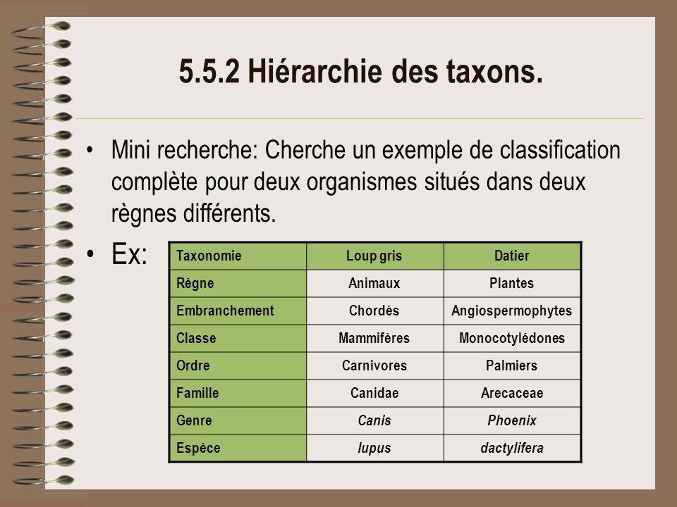 5.5.2 Hiérarchie des taxons. Ex: