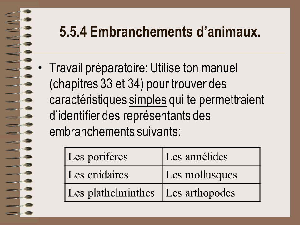 5.5.4 Embranchements d'animaux.