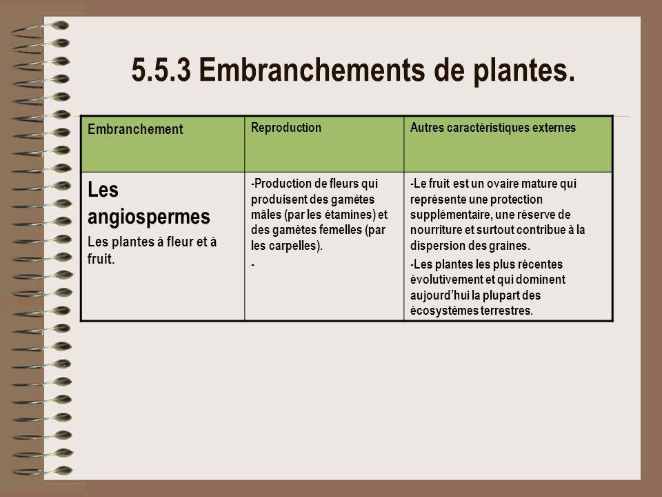 5.5.3 Embranchements de plantes.