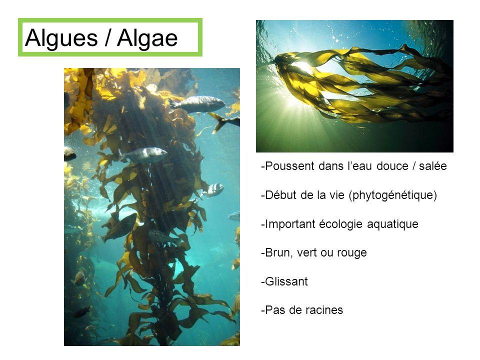 Algues / Algae Poussent dans l'eau douce / salée