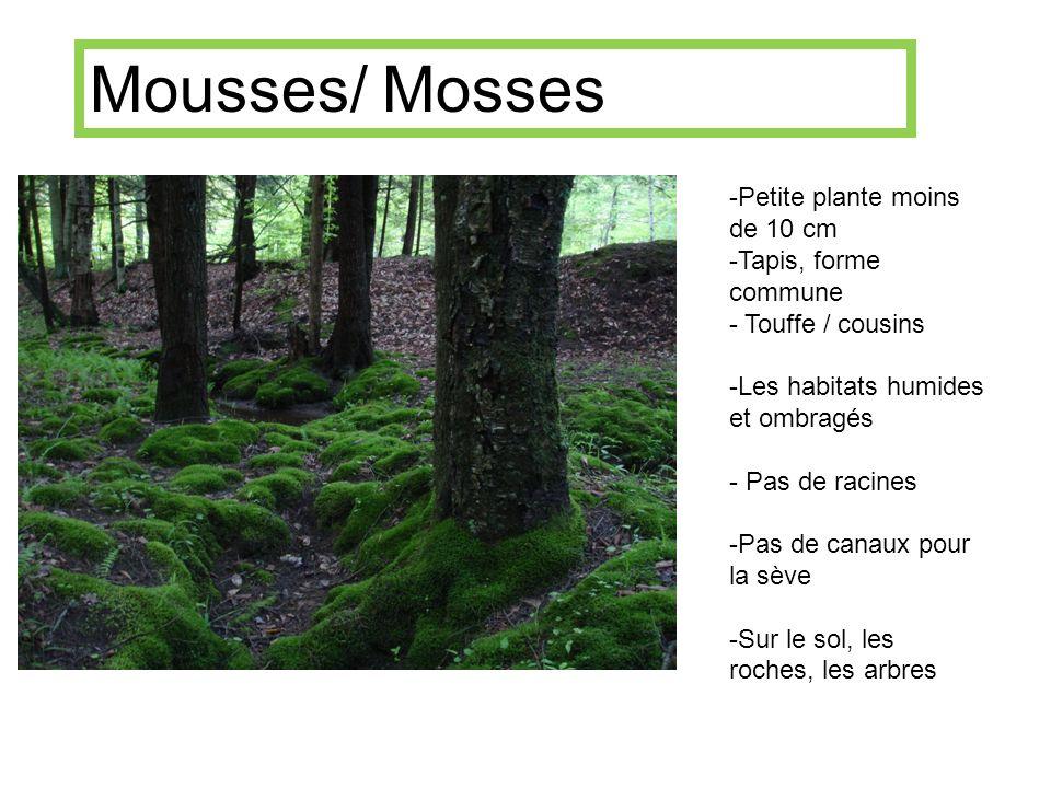 Mousses Mousses/ Mosses Petite plante moins de 10 cm
