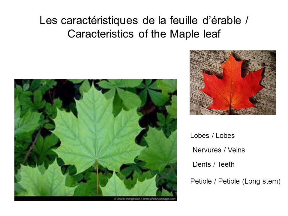Les caractéristiques de la feuille d'érable / Caracteristics of the Maple leaf