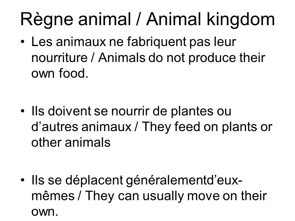Règne animal / Animal kingdom