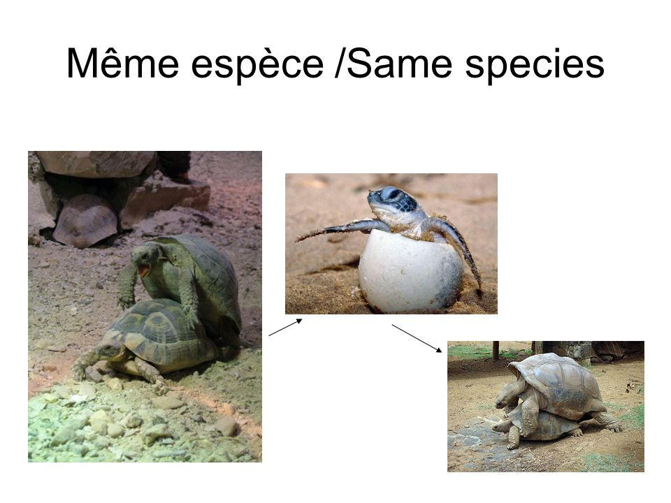 Même espèce /Same species