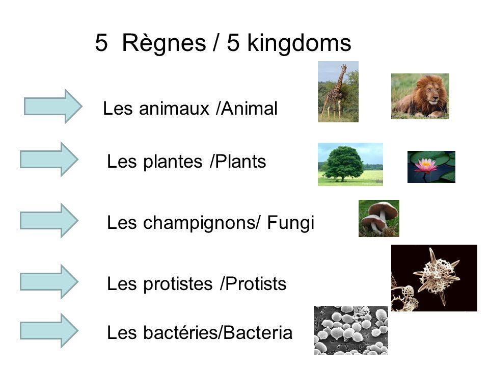 5 Règnes / 5 kingdoms Les animaux /Animal Les plantes /Plants