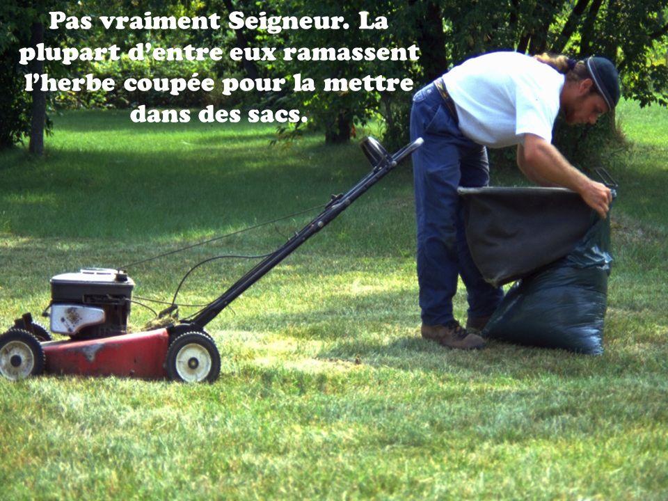 Pas vraiment Seigneur. La plupart d'entre eux ramassent l'herbe coupée pour la mettre dans des sacs.