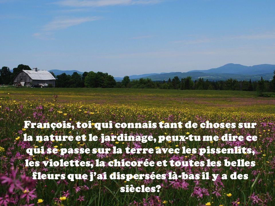 François, toi qui connais tant de choses sur la nature et le jardinage, peux-tu me dire ce qui se passe sur la terre avec les pissenlits, les violettes, la chicorée et toutes les belles fleurs que j'ai dispersées là-bas il y a des siècles