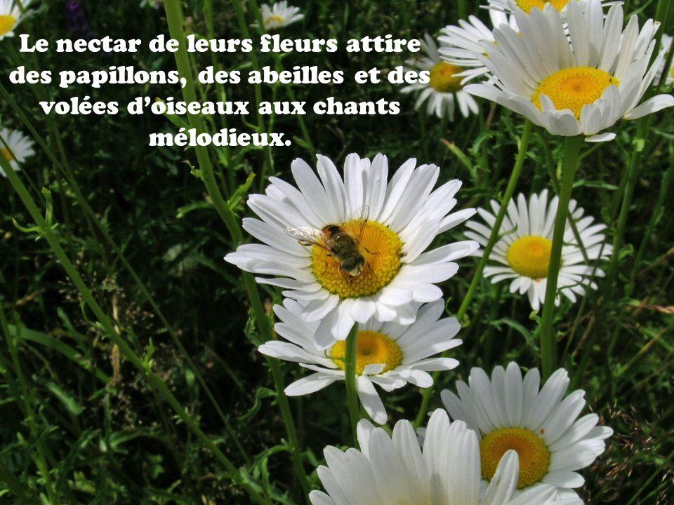 Le nectar de leurs fleurs attire des papillons, des abeilles et des volées d'oiseaux aux chants mélodieux.