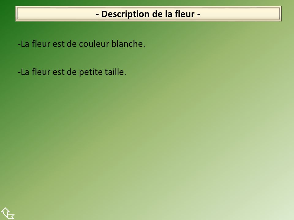 - Description de la fleur -