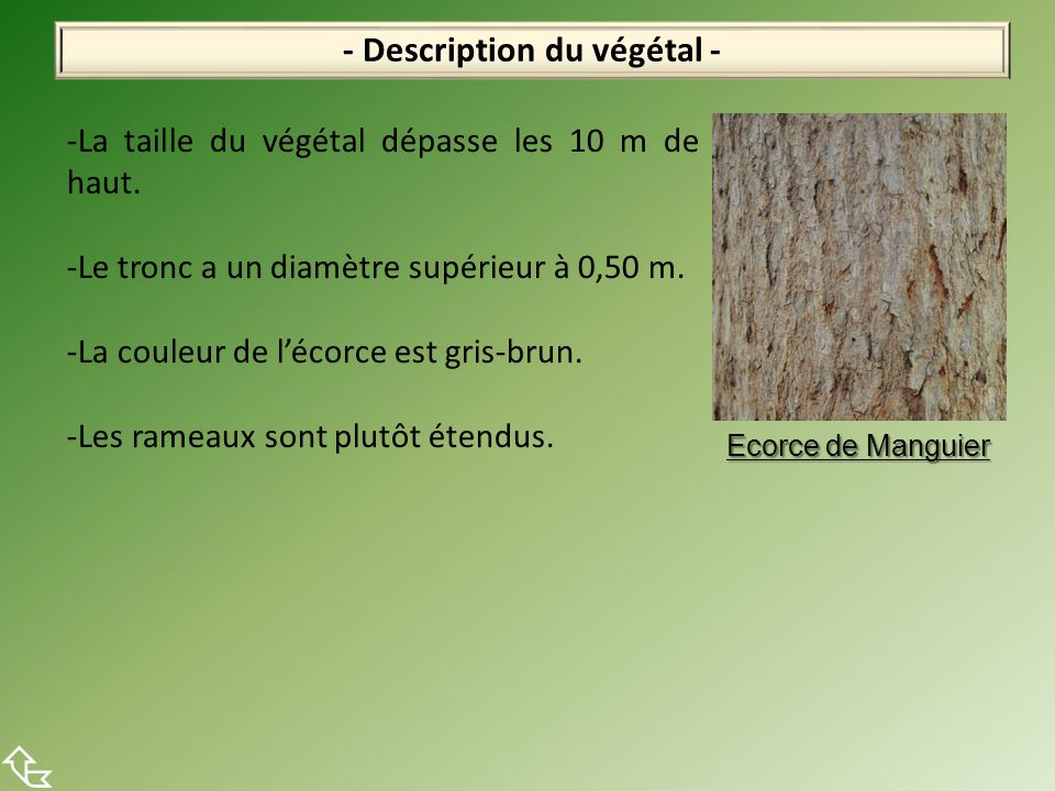 - Description du végétal -