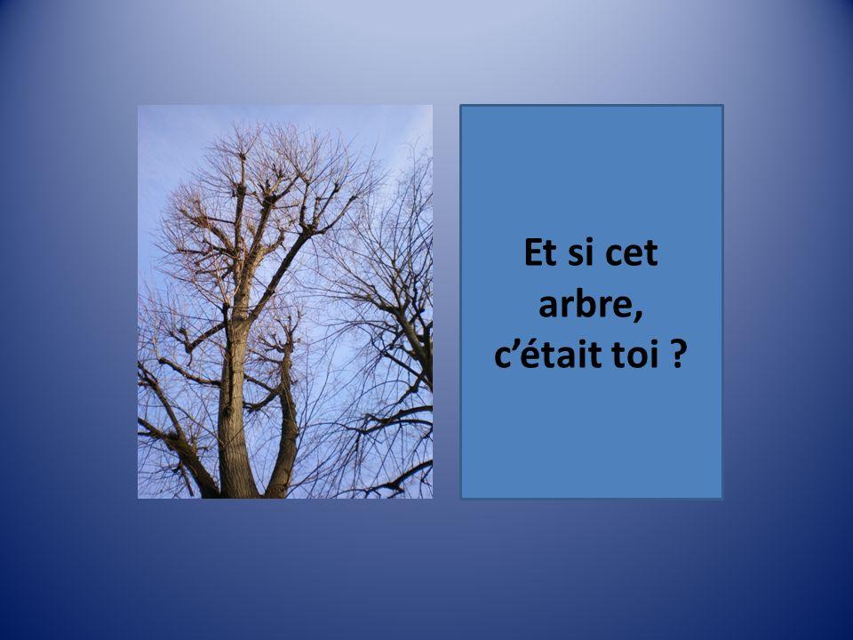 Et si cet arbre, c'était toi