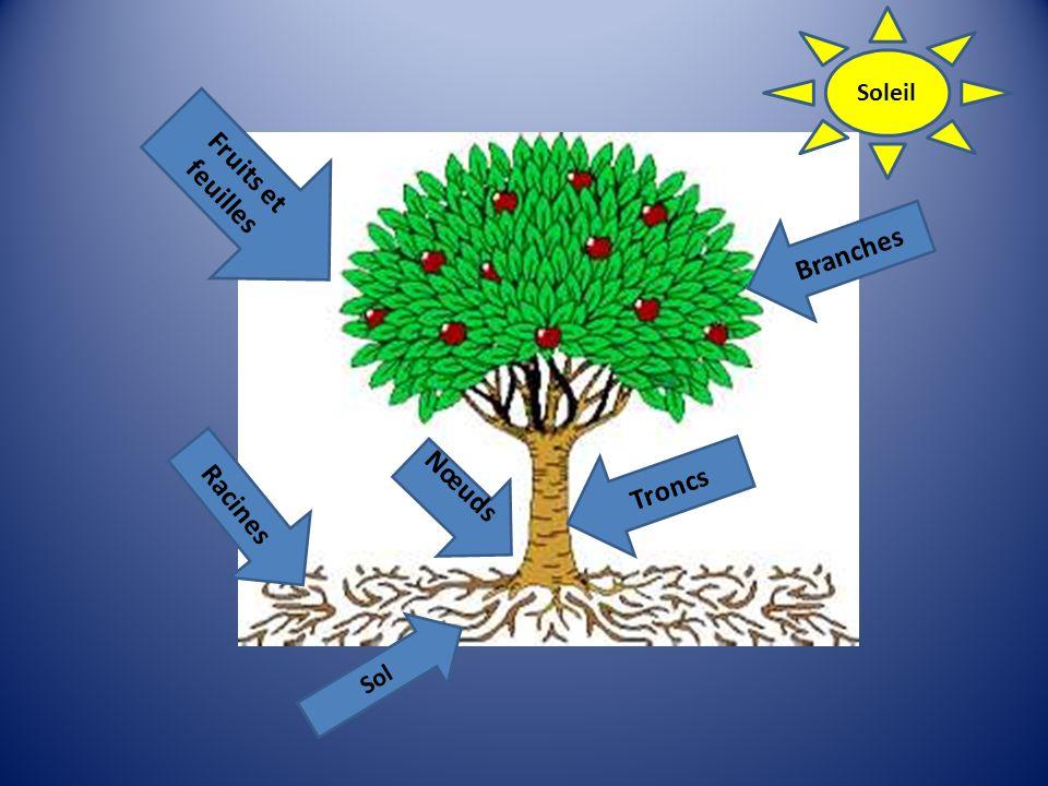 Fruits et feuilles Branches Troncs Nœuds Racines