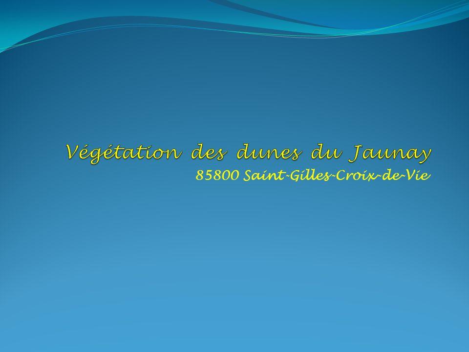 Végétation des dunes du Jaunay