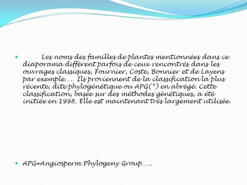 Les noms des familles de plantes mentionnées dans ce diaporama diffèrent parfois de ceux rencontrés dans les ouvrages classiques, Fournier, Coste, Bonnier et de Layens par exemple…. Ils proviennent de la classification la plus récente, dite phylogénétique ou APG(*) en abrégé. Cette classification, basée sur des méthodes génétiques, a été initiée en 1998. Elle est maintenant très largement utilisée.
