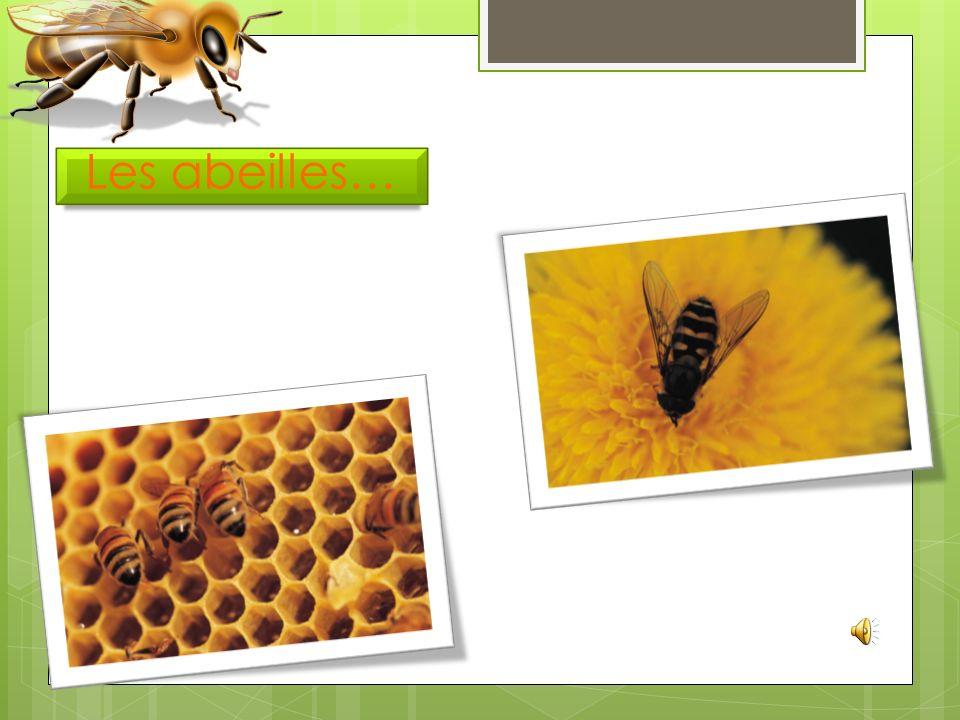 Les abeilles…