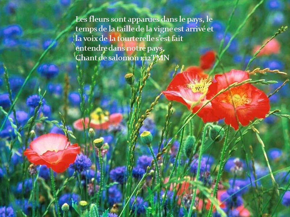 Les fleurs sont apparues dans le pays, le temps de la taille de la vigne est arrivé et la voix de la tourterelle s'est fait entendre dans notre pays.