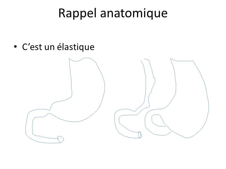 Rappel anatomique C'est un élastique