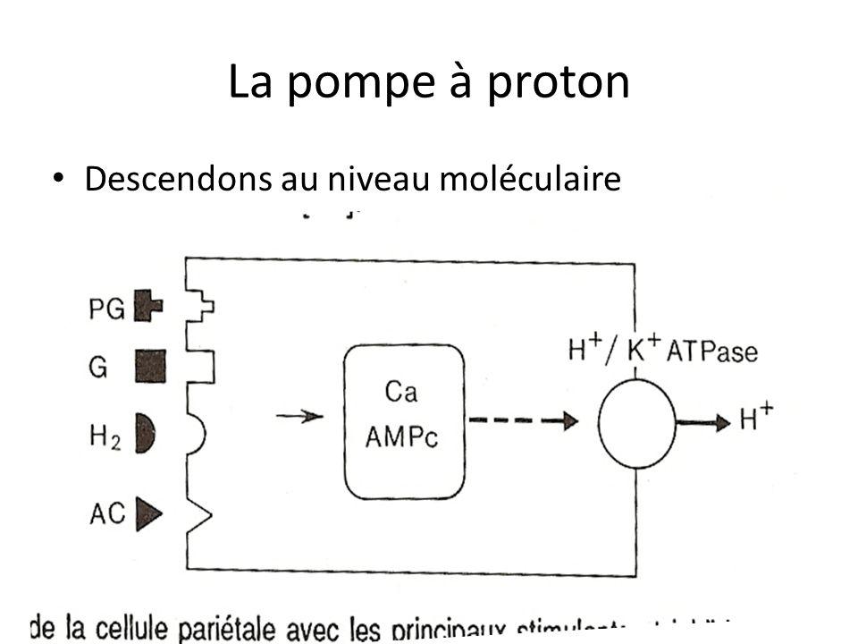 La pompe à proton Descendons au niveau moléculaire