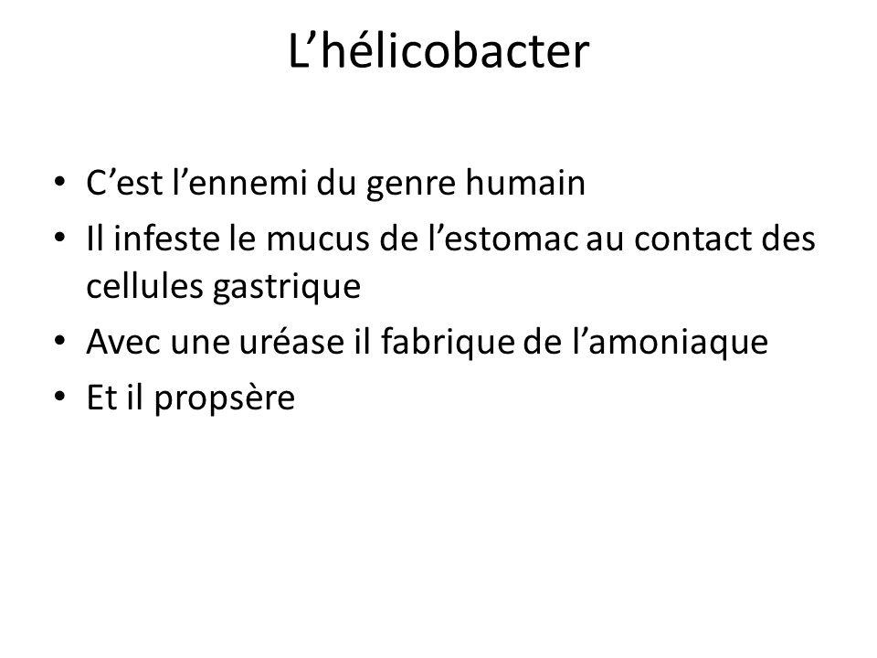 L'hélicobacter C'est l'ennemi du genre humain