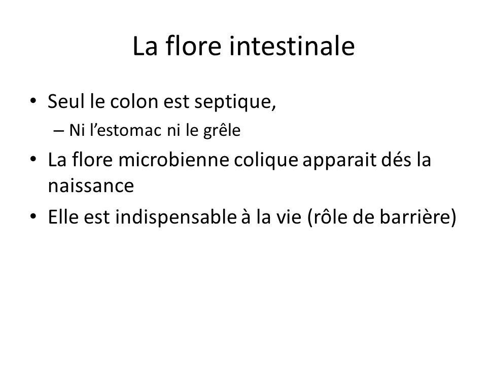 La flore intestinale Seul le colon est septique,