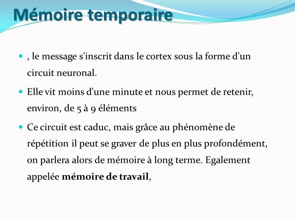Mémoire temporaire , le message s inscrit dans le cortex sous la forme d un circuit neuronal.