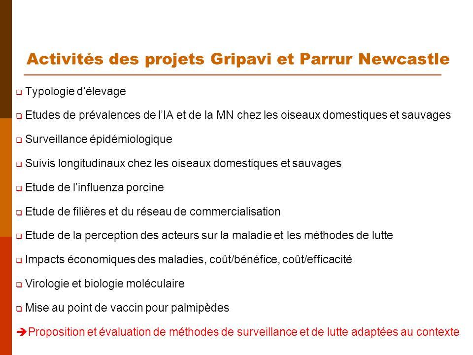 Activités des projets Gripavi et Parrur Newcastle